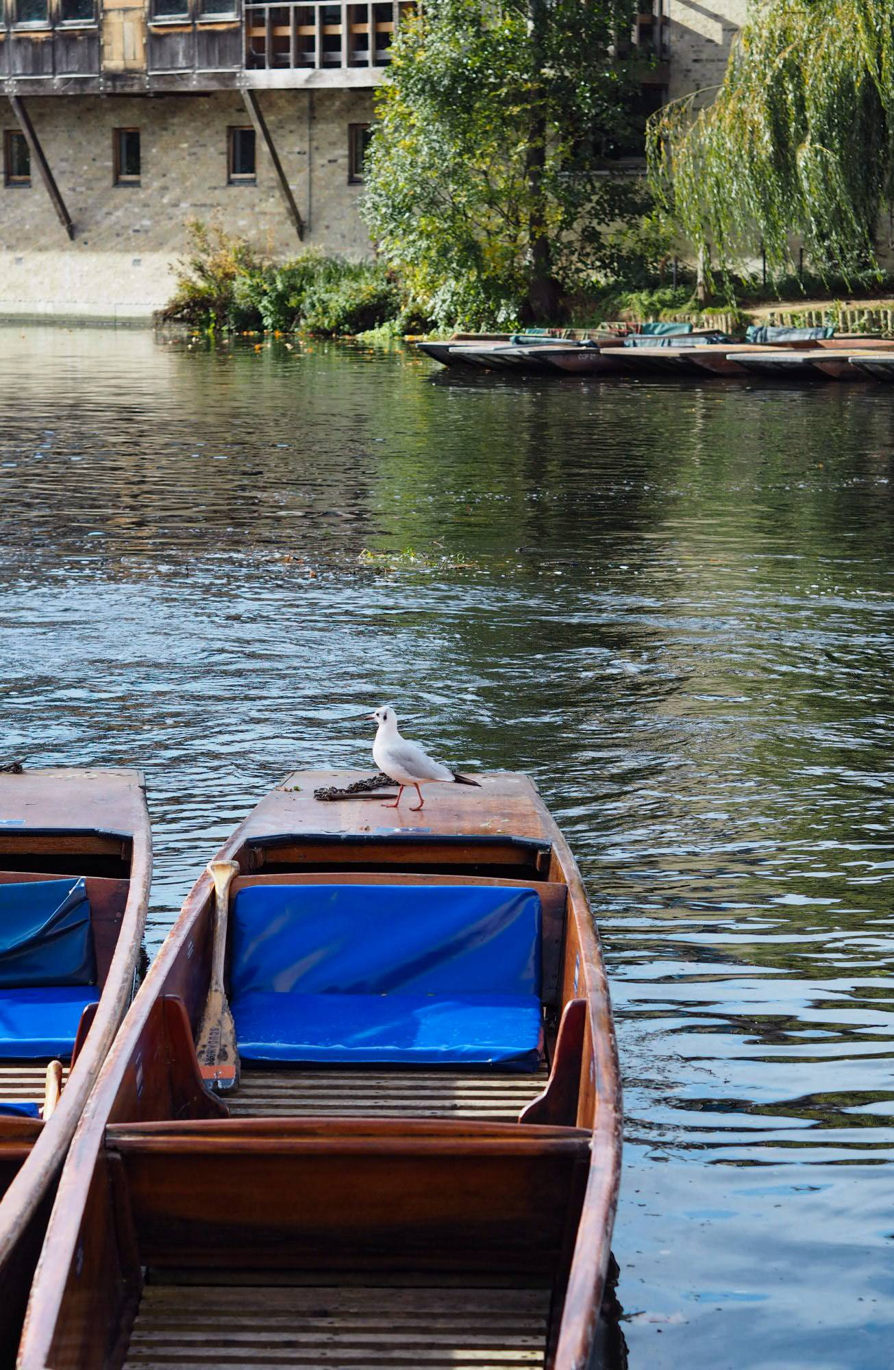Scudamores Punting, Cambridge, Things to do in cambridge